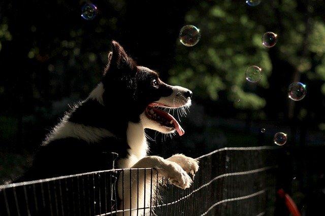 Koira nojaa aitaan
